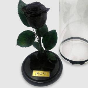 گل رز شازده کوچولو مشکی (جاودان)