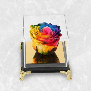 سفارش آنلاین گل دیو و دلبر ، گل رز جاودان هفت رنگ