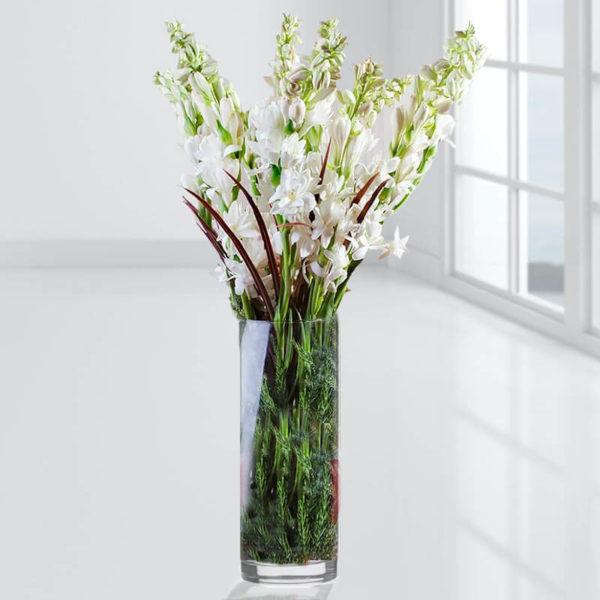 خرید انلاین گل مریم ، گلدان گل مریم