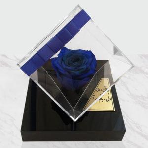 گل جاودان دیو و دلبر آبی