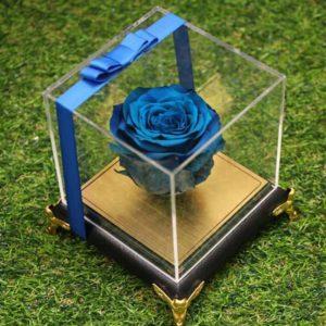 گل رز جاودان آبی فرشته
