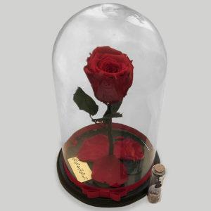خرید اینترنتی گل رز شازده کوچولو قرمز