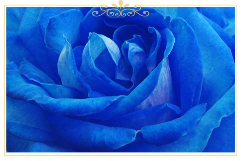 معنی گل رز آبی