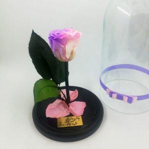 گل رز شازده کوچولو صورتی (جاودان)